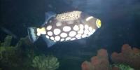 Hastings-Akvarium.jpg