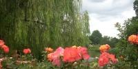Regent´s Park-růžová zahrada.jpg