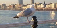 Brighton - Pohled z královského mola.jpg