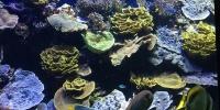 Oceánografické Muzeum Monako.jpg